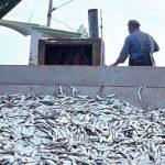 Chile gasta más de US$ 133 millones en subsidios pesqueros, creando un círculo vicioso y fomentando la sobrepesca